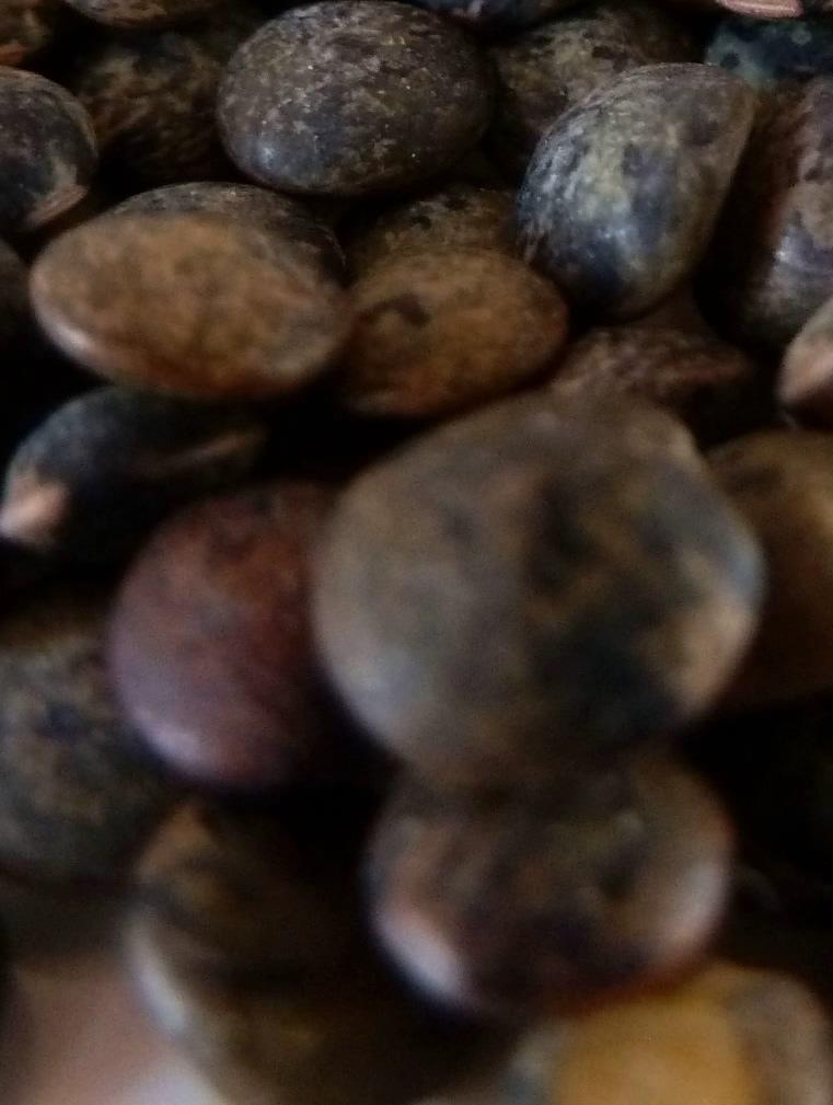 Legumes secs proteines glucides 01