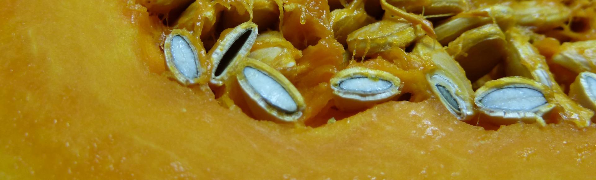 Pepins de citrouille