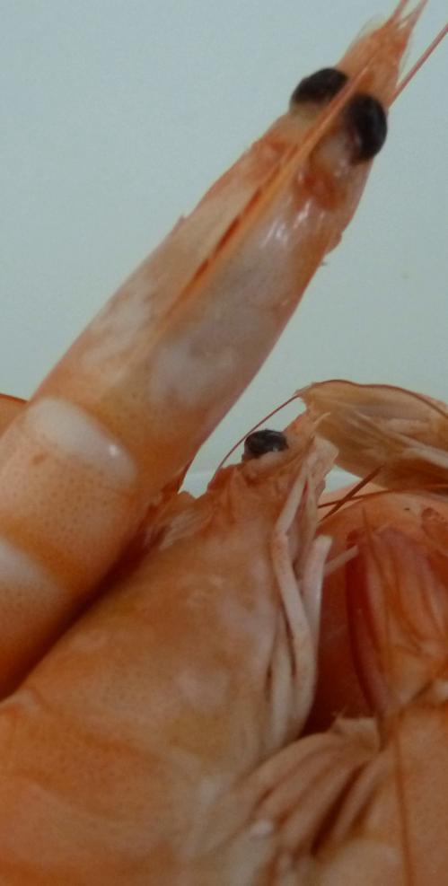 Risotto aux crevettes 1